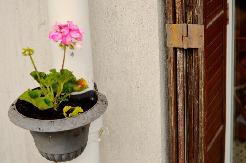 gardenremake15